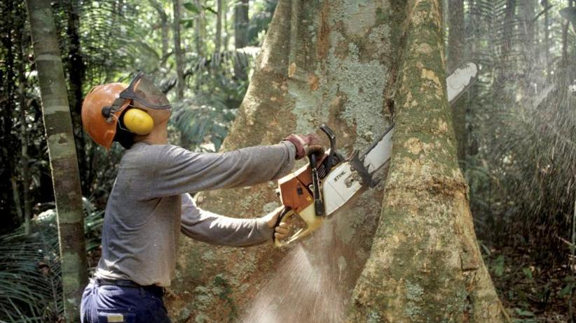 Weltbiodiversitätsrat: Experten debattieren in Kolumbien über Biodiversität