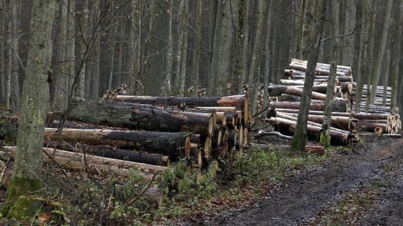 Verstoß gegen EU-Recht: EuGH: Abholzaktion im polnischen Urwald war illegal
