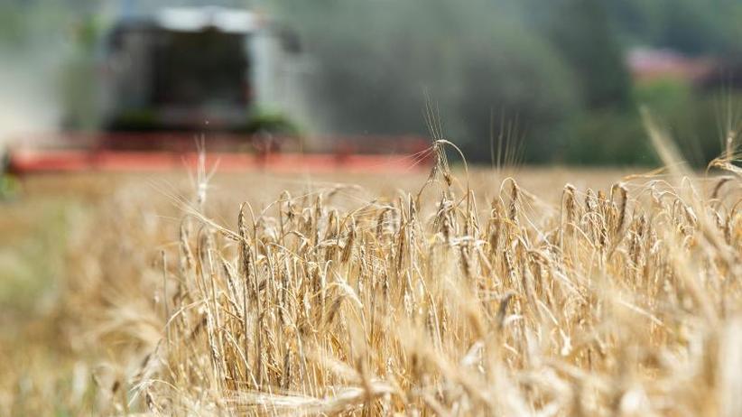 Erste Bilanz von Bauernverband: Schon Noternte bei Getreide