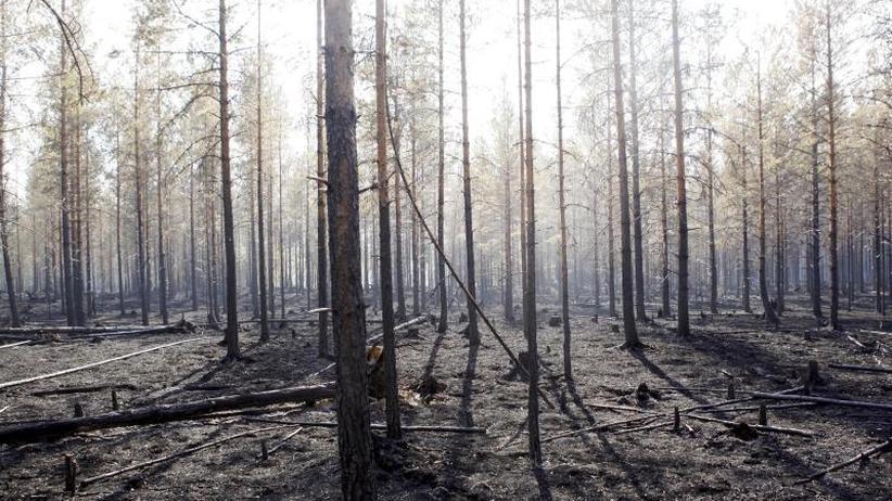 Noch 27 Feuer: Zahl der Waldbrände in Schweden zurückgegangen