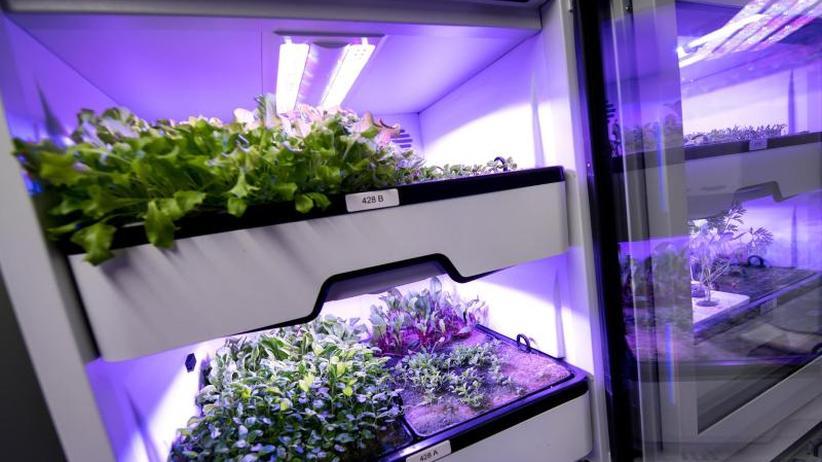 """Milliardenmarkt der Zukunft: """"Vertical Farming"""": Neue Zauberworte der Licht-Industrie"""