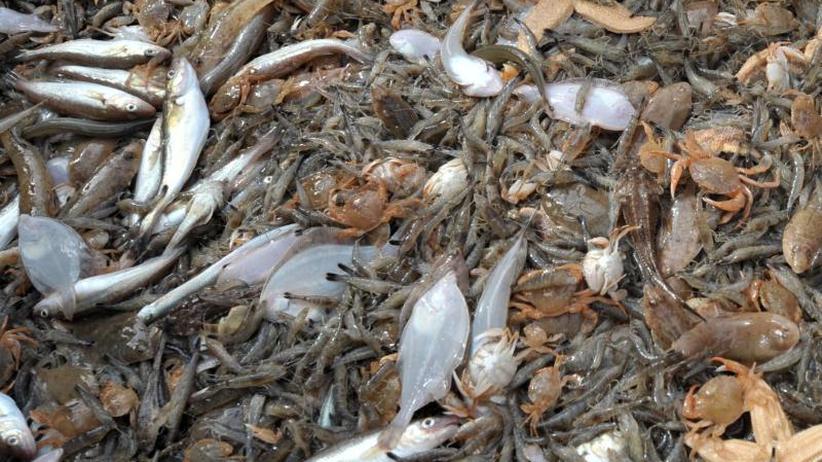 Kampf gegen Überfischung: Trotz Rückwurfverbot: Beifang landet offenbar weiter im Meer
