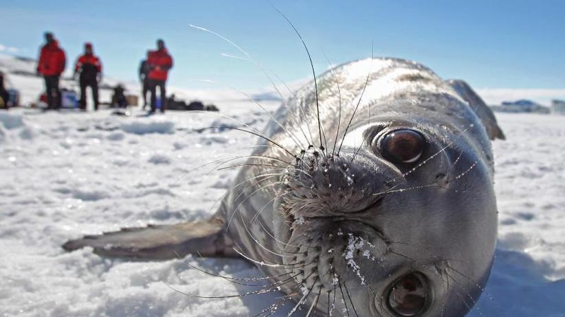 China und Russland blockieren: Pläne für Meeresschutzgebiet am Südpol gescheitert