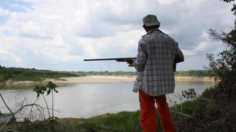 Schutzgebiete wirken: Schildkröten-Population am Amazonas erholt sich