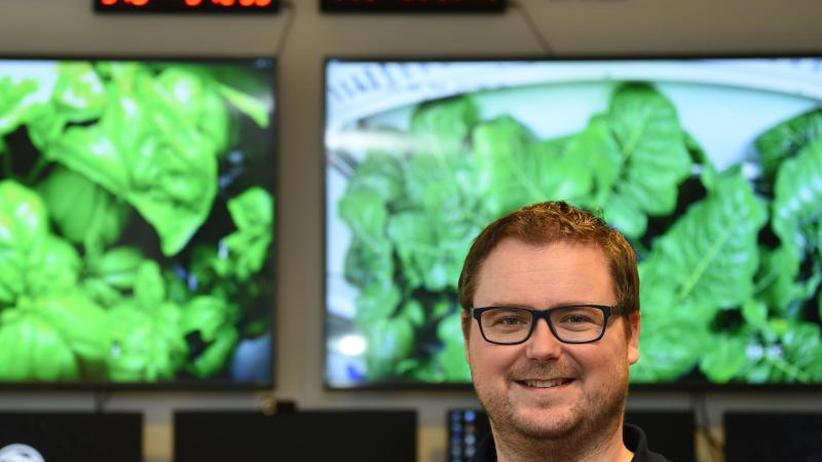 """Mehr als 200 Kilo geerntet: Gärtner in der Antarktis: """"Man fühlt sich wie ein Astronaut"""""""