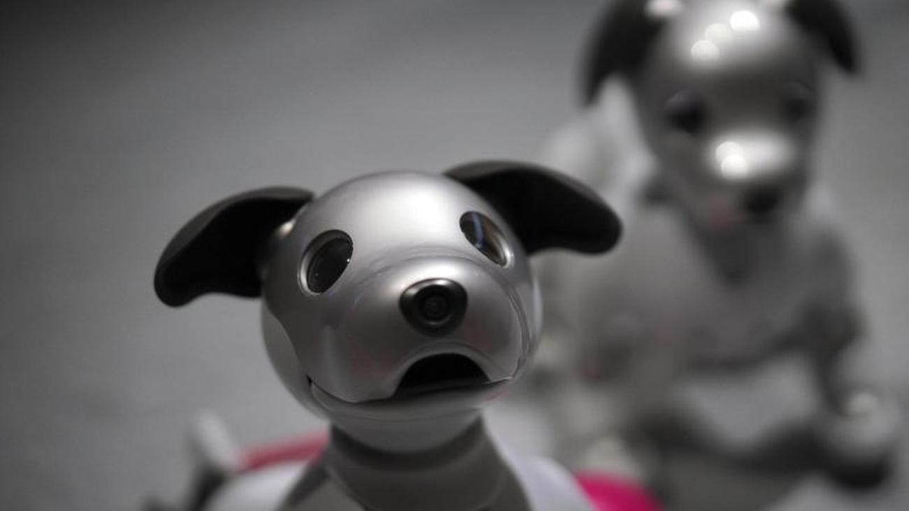 New sensors: Sony makes robotic dog a watchdog in the