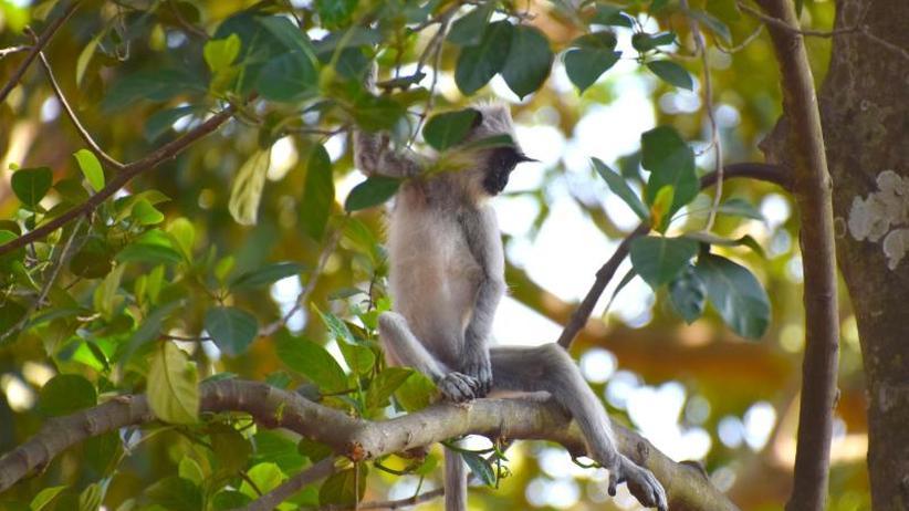 Vor 45.000 Jahren: Jagd auf Affen half Homo sapiens beim Überleben im Regenwald