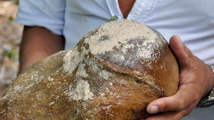 Knochenfunde in Mittelamerika: Vom Riesenfaultier, das ins Wasserloch fiel