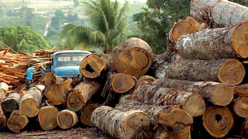 Angriff auf die grüne Lunge: Abholzung des Amazonas-Regenwaldes legt zu