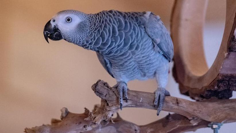 Tiergeschichten: Sprechender Papagei hält Busunternehmer bei Laune