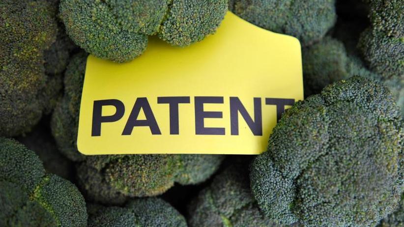 Proteste von Umweltgruppen: Melone bis Gänseblümchen: Kritik an Patenten auf Züchtung
