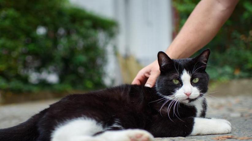 Erster experimenteller Beweis: Und Minka versteht doch: Katzen können ihren Namen erkennen