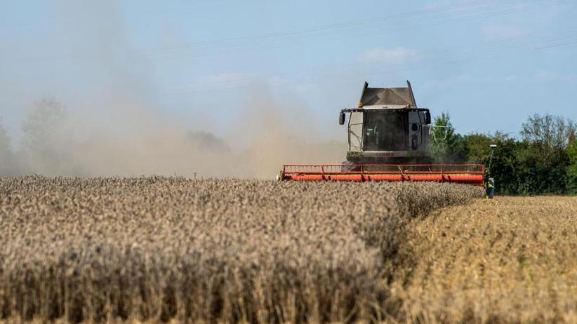 UN-Welternährungsorganisation: Weltweite Getreideernte deckt Verbrauch nicht