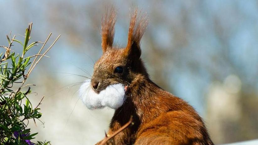 Lebensräume: Berliner macht Eichhörnchen zu Facebook-Stars