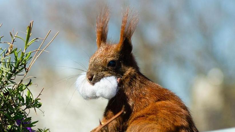 Berliner macht Eichhörnchen zu Facebook-Stars