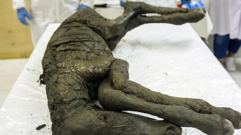 Sensationsfund In Sibirien Reste Von Blut Und Urin In 40