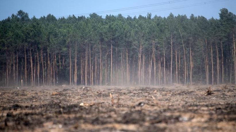Angst um Wälder und Felder: 2019 könnte ein weiterer Dürresommer drohen