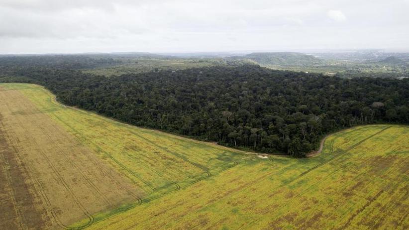 Der Fluch der Sojabohne: US-Handelskrieg bringt Brasiliens Regenwald in Gefahr