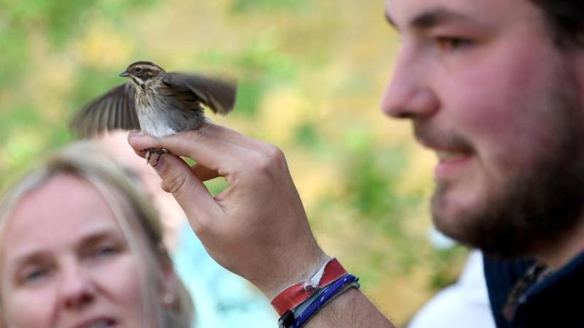 Vogelfang für die Wissenschaft: Ringe für 180.000 Vögel jährlich