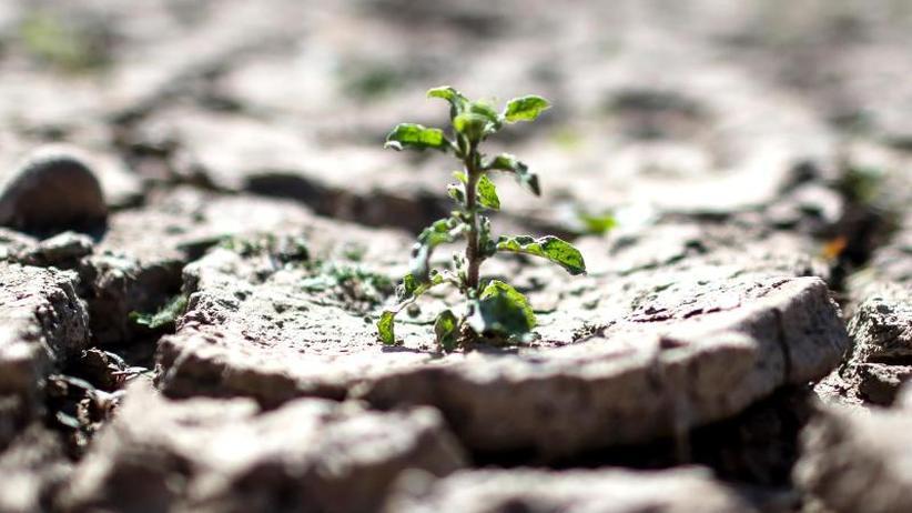 Inhalte des Sonderberichts: Weltklimarat: Konsumverhalten ändern - Klima schützen