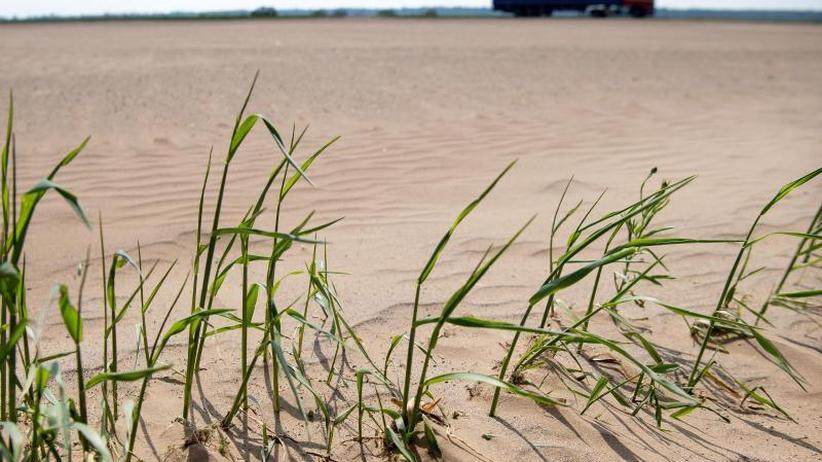Auswirkungen des Klimawandels: Weltklimarat veröffentlicht Bericht zur Erderwärmung