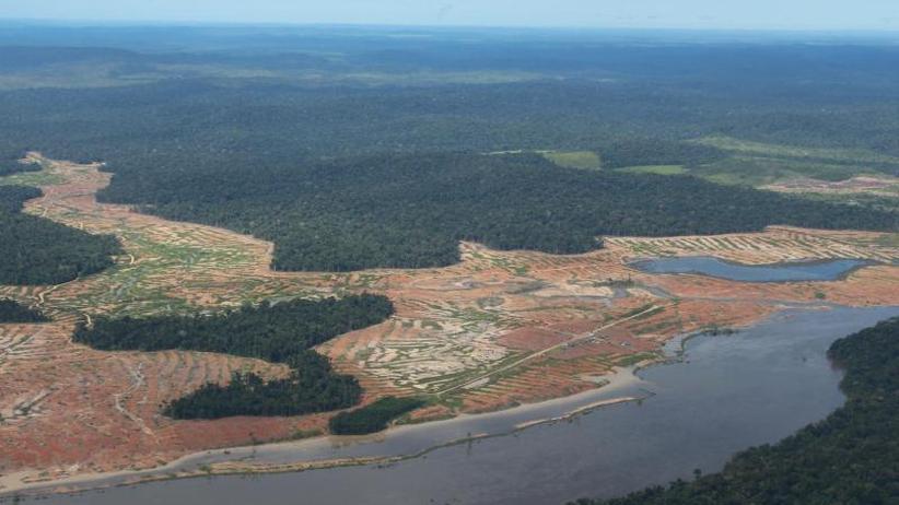 """""""Leere Wälder""""?: Viele Tierbestände seit 1970 mehr als halbiert"""