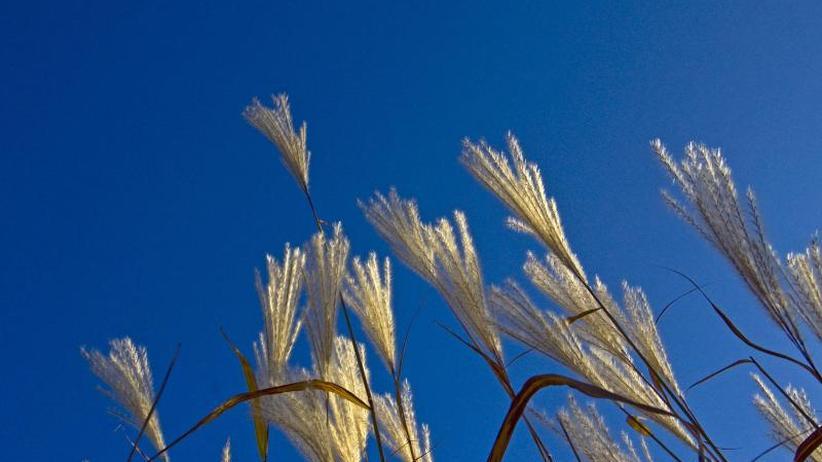 Traum für Hobbygärtner: Gräser im Garten sind unkompliziert