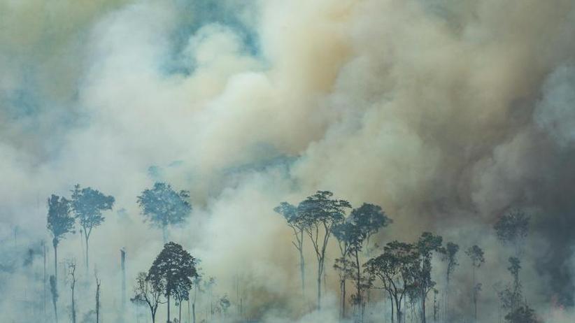 Hercules-Löschflugzeuge: Soldaten bekämpfen Flammen im brasilianischen Regenwald