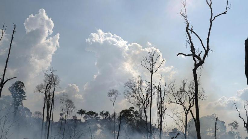Verheerende Feuer in Brasilien: Amazonas-Brände: Bolsonaro empört über Hilfsangebot der G7
