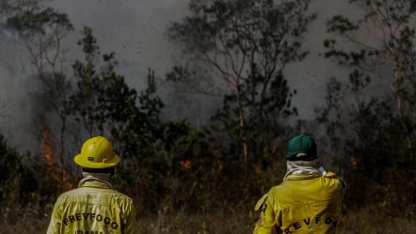 Angst um Image und Geschäfte: Investoren fordern Schutz des Amazonas