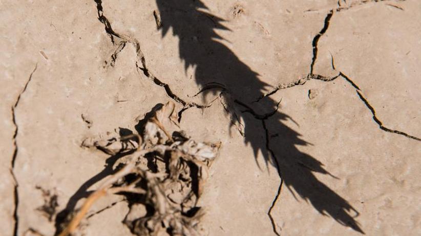 Faktencheck: 25 Klimakonferenzen - ist das alles überhaupt nötig?