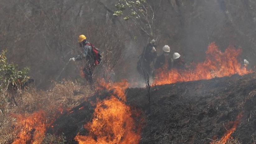 Tropischer Trockenwald brennt: Brandstifter in Bolivien gefährden einzigartiges Ökosystem
