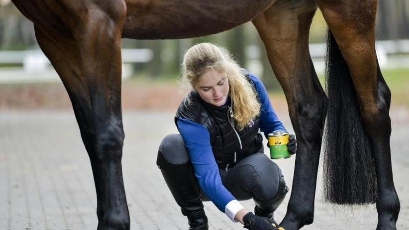 Hofleben: Wie werde ich Pferdewirt/In?