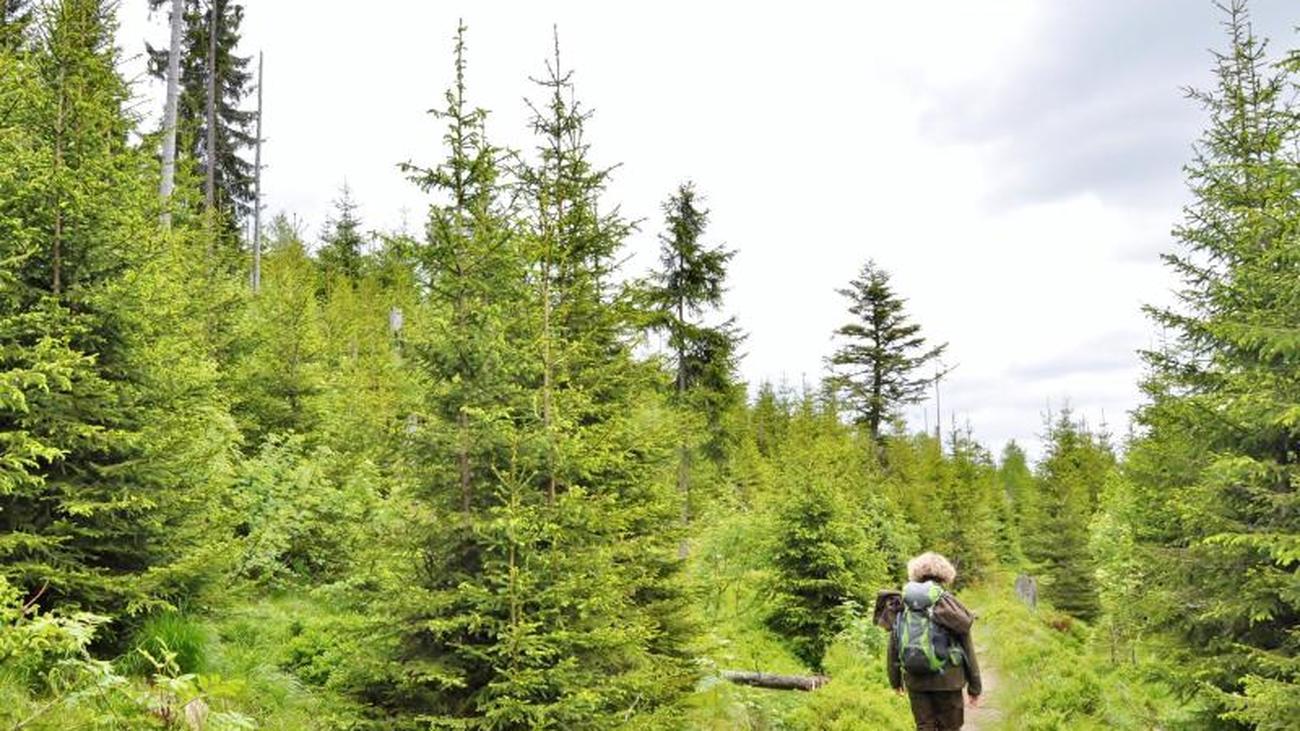 Der Bayerische Wald wird 50
