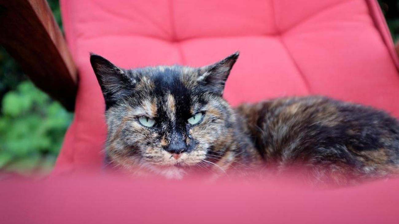 Corona bei Hund und Katze in Deutschland nachgewiesen