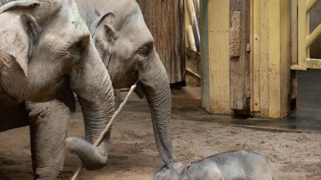 Wiegen, zählen, messen: Zoos machen Inventur