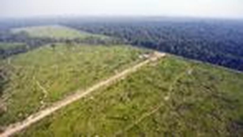 Brasiliens Regenwald: Kahlschlag um jeden Preis
