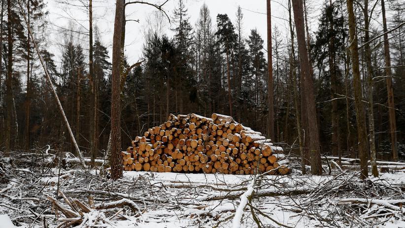 Polen: Abholzung von polnischem Urwald laut EuGH-Experte rechtswidrig