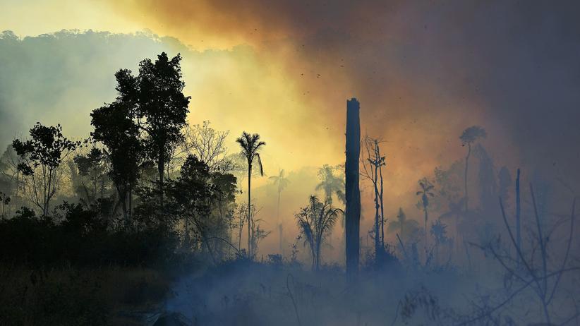 Brasilien: Der Planet vs. Bolsonaro