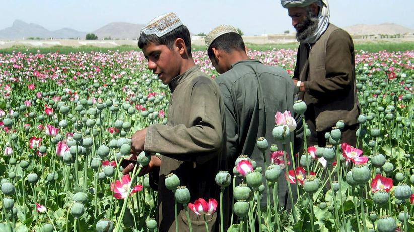 Afghanistan: Damit der Schlafmohn nicht mehr blüht