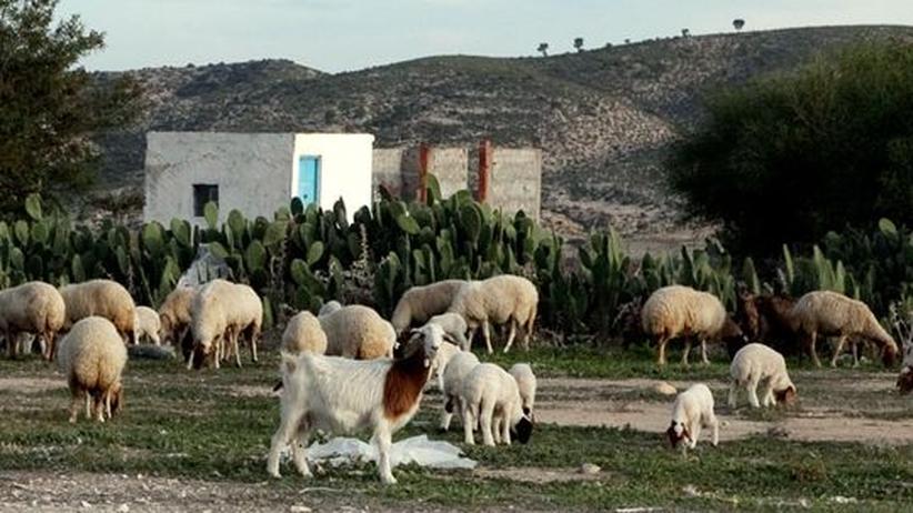 Tunesien: Mit Alpenziegen und Kakteen gegen die Folgen des Klimawandels