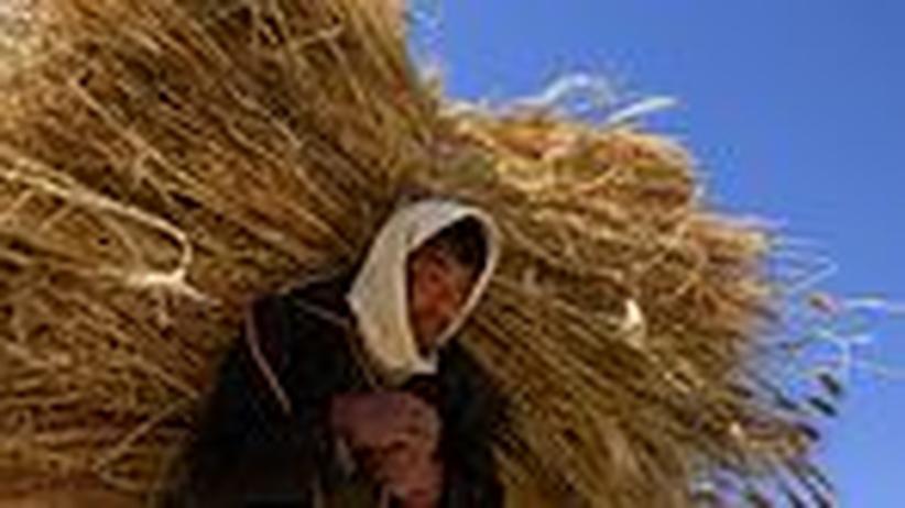 Afghanistan: Weizen statt Schlafmohn
