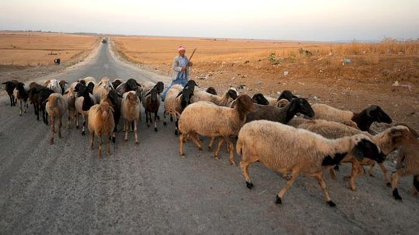 Tunesien: Warum wir tunesische Oliven brauchen