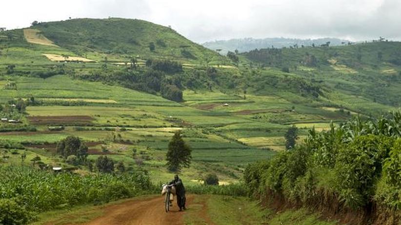 Farm in Kapchorwa in Uganda