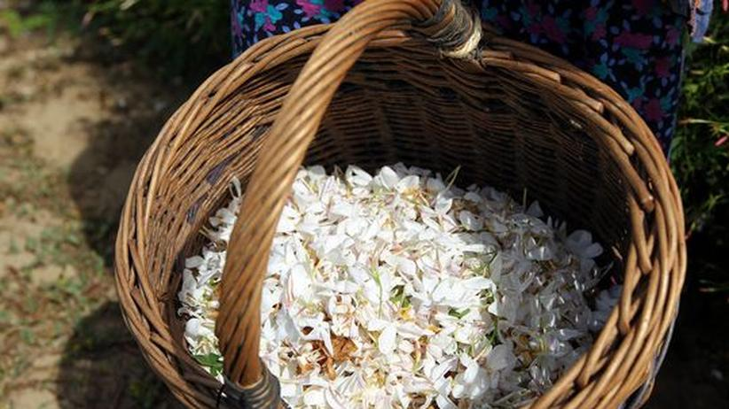 EU-Verbraucherschutz: Parfumklassiker verlieren ihren Duft