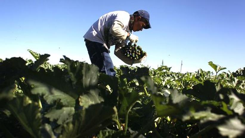 Einwanderung: US-Senatoren wollen Illegale schneller einbürgern