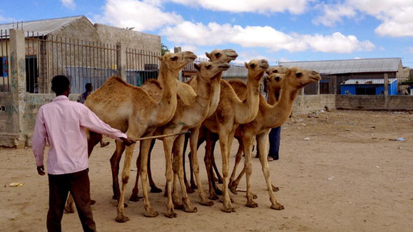 Horn von Afrika: Das Wunder von Somaliland