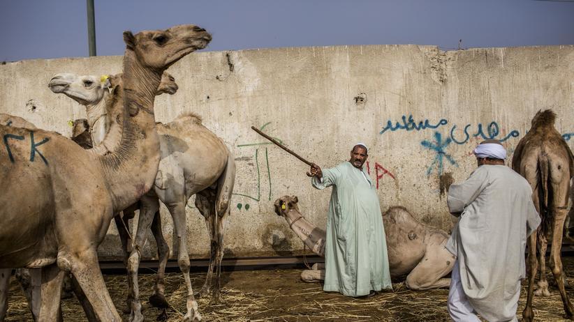 Forschungsergebnisse: Die Bibel umschreiben? Wegen Kamelen?
