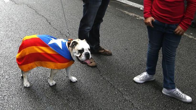 Ein Hund beim katalanischen Nationalfeiertag in Barcelona