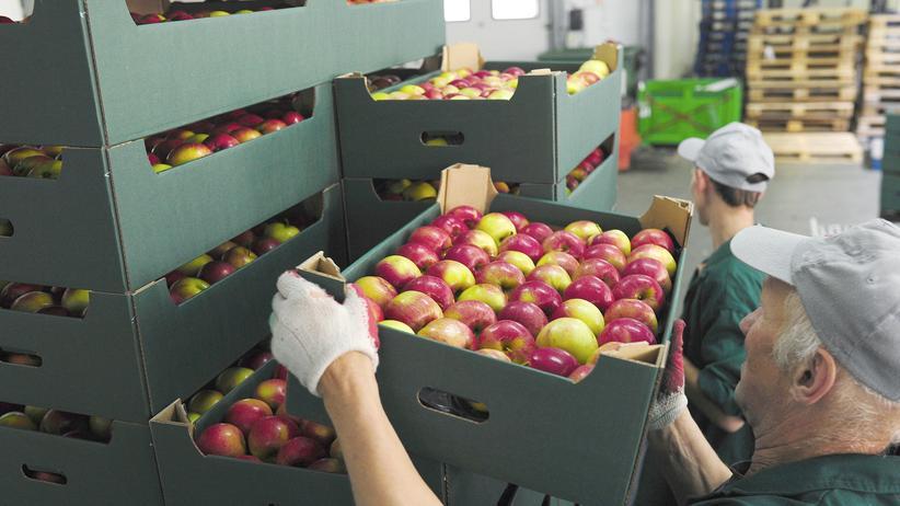 Arbeiter verladen Äpfel in der polnischen Stadt Grojec.